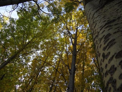 lapland_forest_evalblog